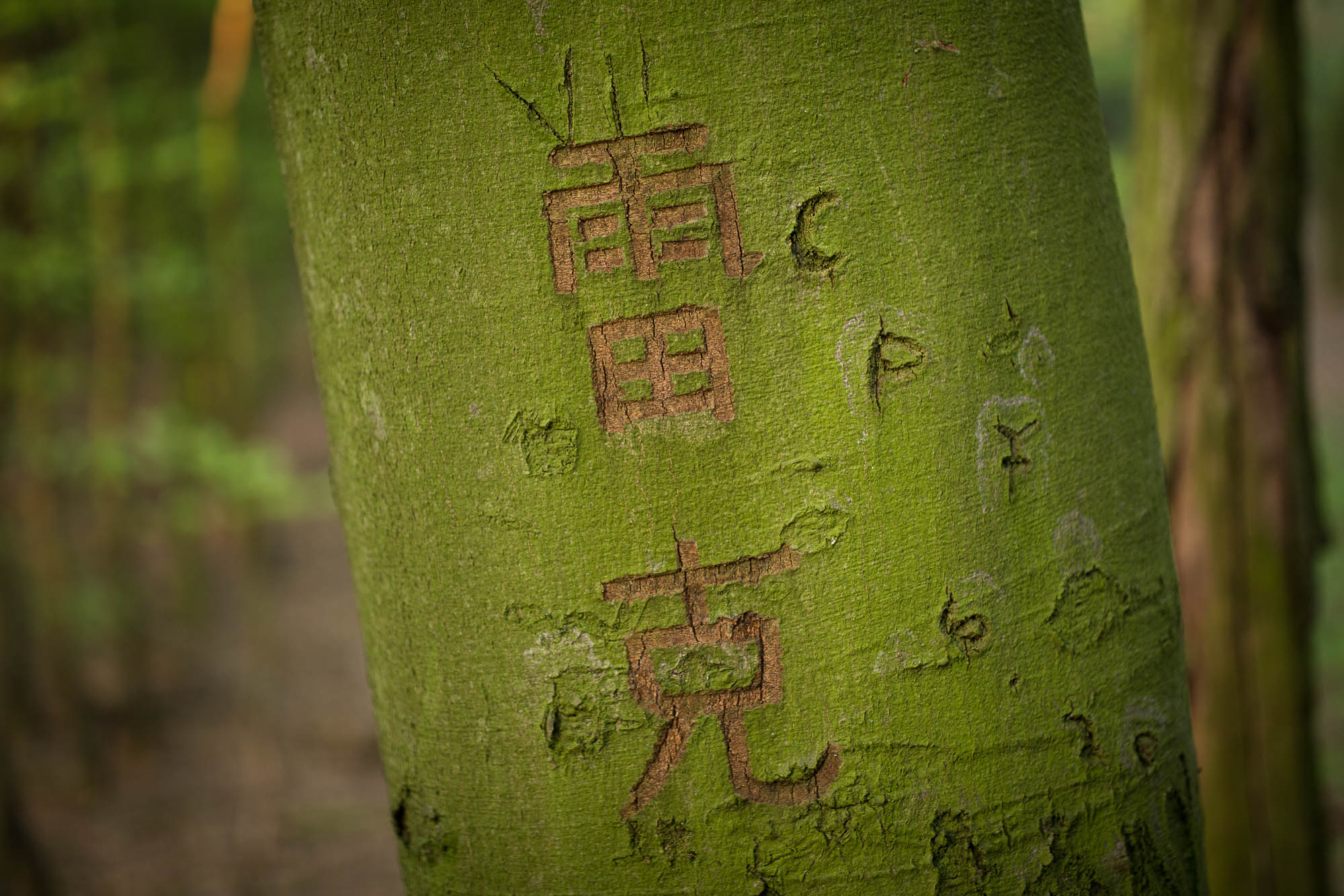 """Leike"" carved into a tree"